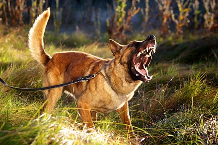Dog Bite Lawsuits