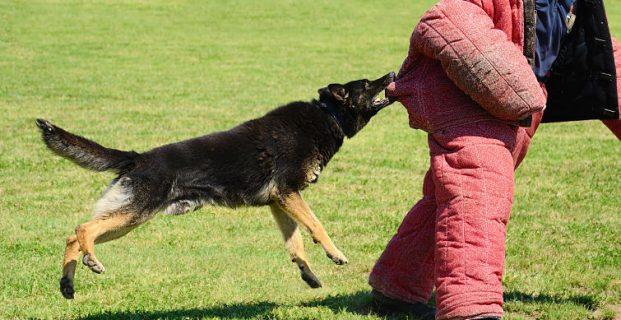 Louisiana Dog Bite Laws